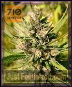 710 Genetics Majestic Lemon Feminised Cannabis Seeds